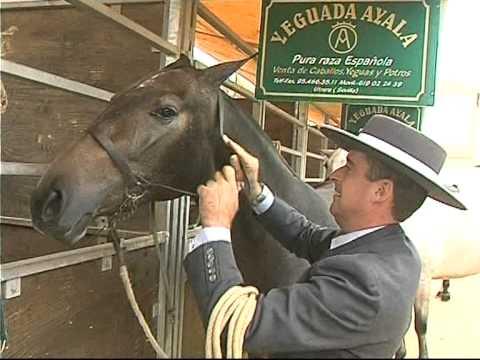 Los mejores caballos de Pura Raza Española estarán en