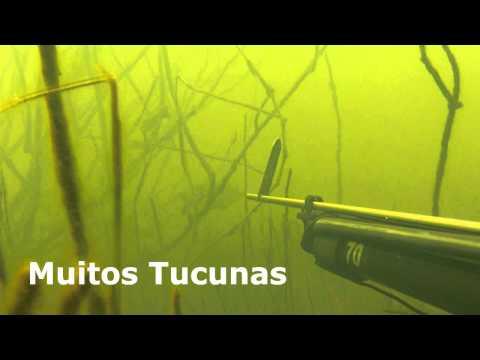 Pesca Sub Tilápias 2013 - Estréia do Arbalete Naja PK Sub GO PRO HD