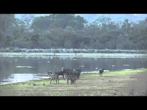 HD African Wildlife Stock footage - Photos of Africa
