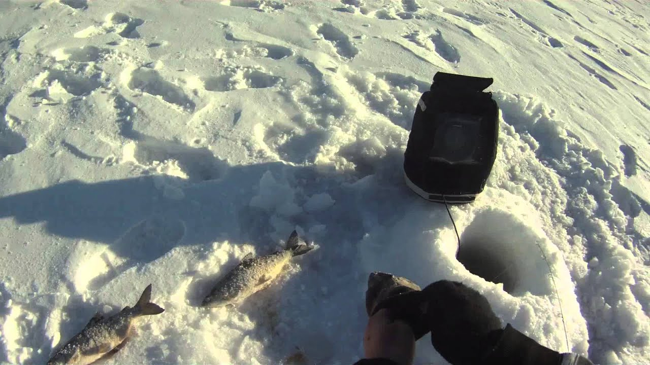Ice fishing northern minnesota tullibee cisco 2014 youtube for Mn ice fishing regulations