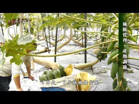 高雄農業故事館-木瓜(影片長度:15分36秒)