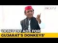 With Gujarats Donkeys, Akhilesh Yadavs Dig At PM Modi, Big B