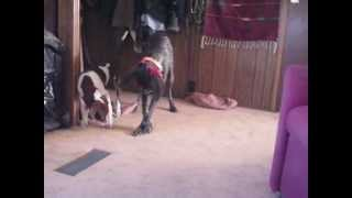 Dugan, Betty Sue and the Bandana dilemma.avi view on youtube.com tube online.