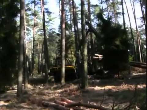 Ponsse. Zrywka drewna dłużycowego w drzewostanie trebieżowym.