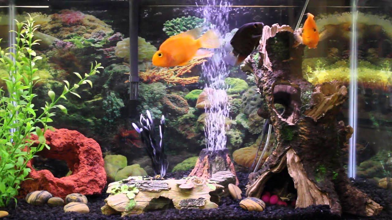 1hr relaxing music aquarium screensaver fishtank hd youtube - Fish tank screensaver pc free ...