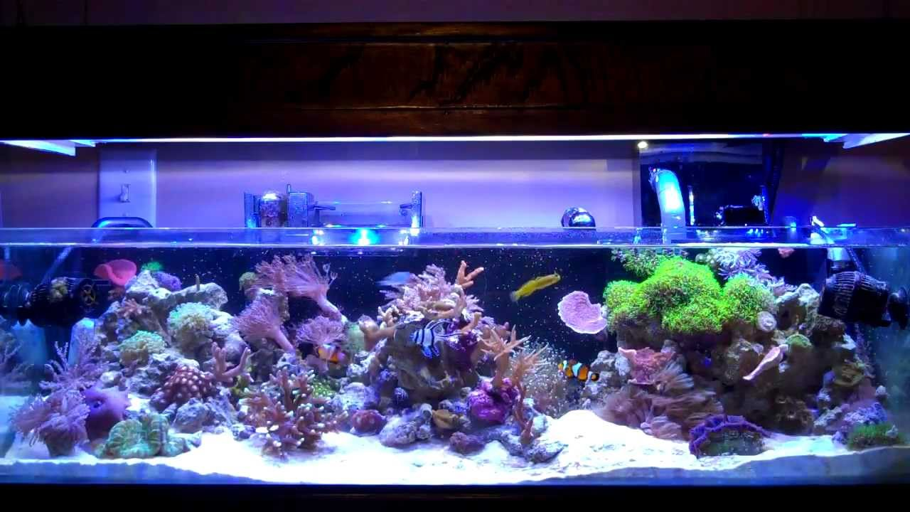 20 gallon reef tank 20 gallon reef tank page 3 the reef for 20 gallon saltwater fish tank