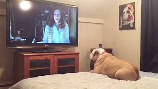 "Bulldog Reacts To Terrifying Nun Scene in ""The Conjuring 2"""
