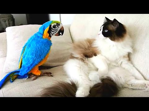 Baby Animals 🔴 Funny Parrots and Cute Birds Compilation (2019) Loros Adorables Recopilación #6