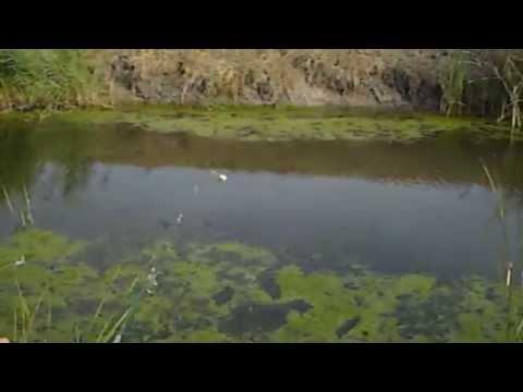 Pecanje stuke zivom ribicom-ep.1