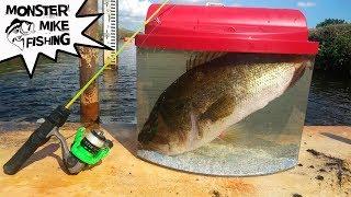 Catching Exotic FISH for Aquarium PET! Help Me Name These Species!