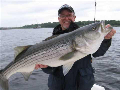 Big striper fishing slide show on narragansett bay spring for Striper fishing ri