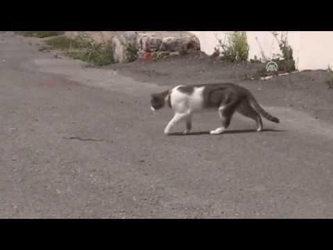 Anadolu Ajansı - Kedinin yılanla oyunu