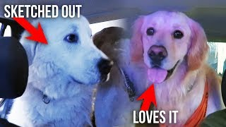 DOGS REACT TO DRIVE THRU CAR WASH (SCS #129)