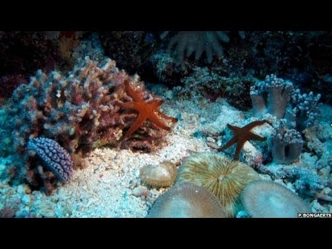 STUNNING TIME-LAPSE SHOWS CORAL REEF'S SECRET LIFE ON THE GREAT BARRIER REEF - BBC NEWS