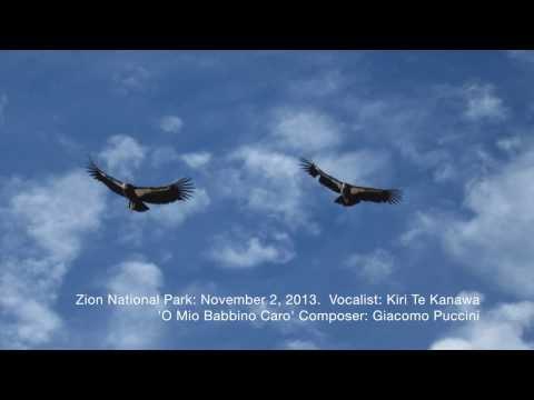 Zion Condors