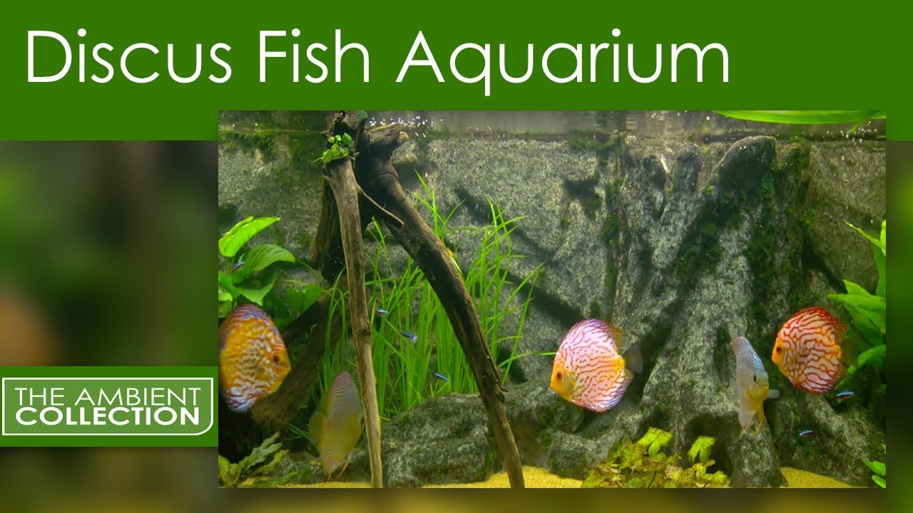 Fish aquarium relaxing music aquarium 2hr relax music for Youtube fish tank