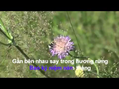 karaoke song lo chieu cuoi nam.mp4