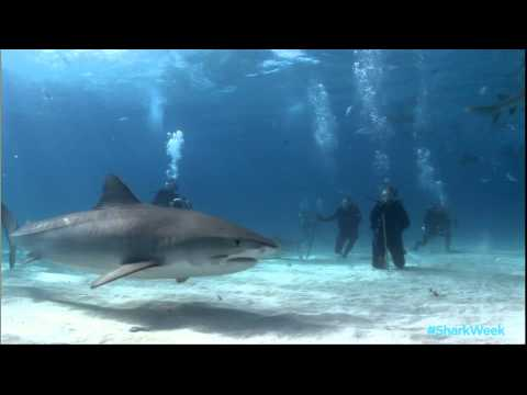 Meet Rob Stewart of Sharkwater