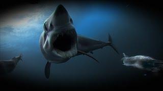 Mako Shark32
