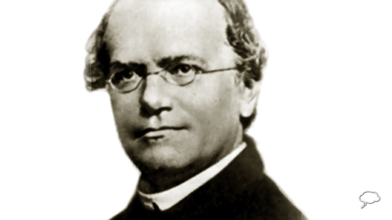 gregor mendel biography Mendel was born july 22, 1822 in to a german-speaking family of heinzendorf, moravia, austrian empire (now hynčice (part of vražné), district of nový jičín, czech republic.