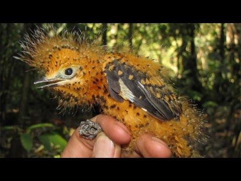 Chim đẹp   Top những loài chim đẹp quý hiếm số 1 thế giới -[ANIMAL]