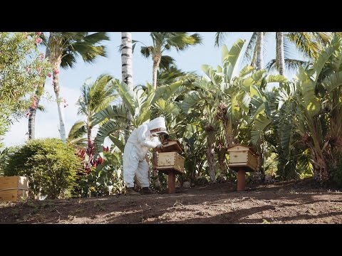 How to keep bees in Hawaii at the Fairmont Orchid Resort