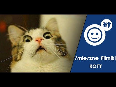 Śmieszne Filmiki [ Koty ] #1