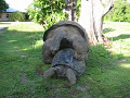 Giant Tortoises Having Fun