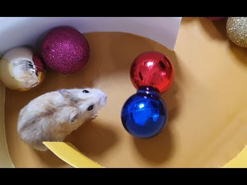 My Funny Pet Hamster in Tower Maze - Obstacle Course for Hamster