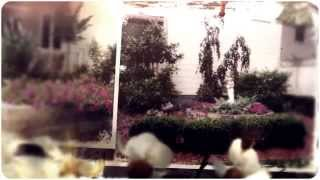 [Grant's Lawn & Garden (859) 879-8229] Video