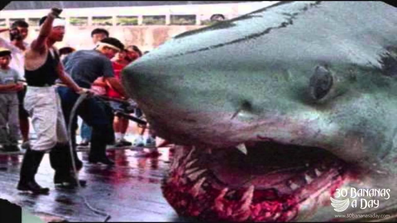 Real Megalodon Shark Attacks