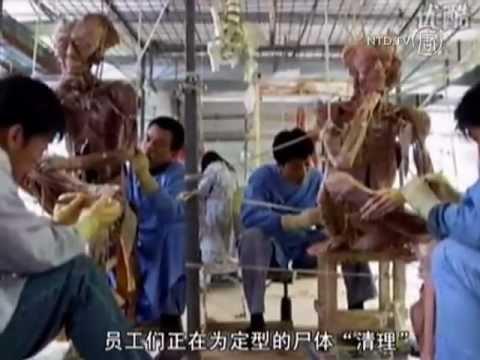 Nhà máy xử lý xác người ở Trung Quốc và các nghi vấn