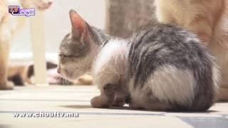 معندهاش و عايشة فمنزل مهدد بالسقوط وطلقات بسبب تربية20 قطة..قصة مؤثرة لمي الياقوت.. عشق من نوع آخر | خارج البلاطو
