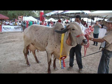 Feria de Sabanalarga 2014