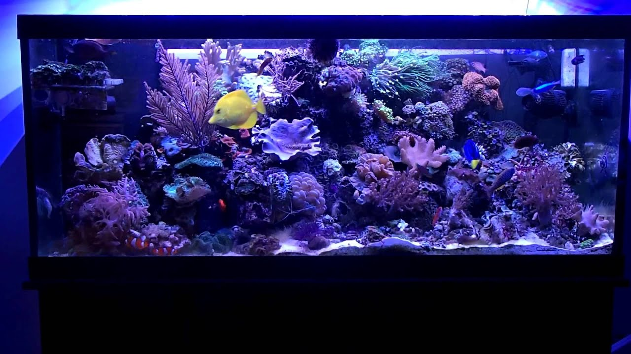 75 gallon saltwater fish tank 75 gallon saltwater fish for Best fish for reef tank