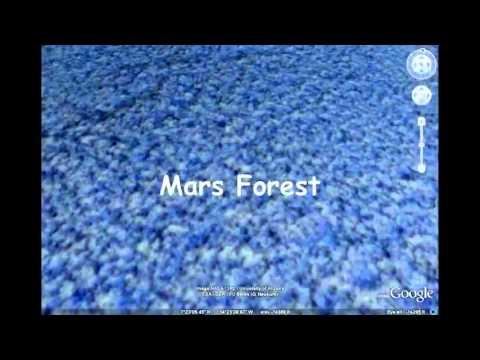 Rừng cây trên sao Hỏa ( ảnh chụp từ vệ tinh)