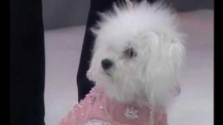 Desfile De Moda Canino En Directo, Mati Mati, Canal9 TV