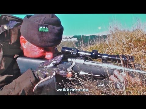 Hunting Red deer in New Zealand part 59