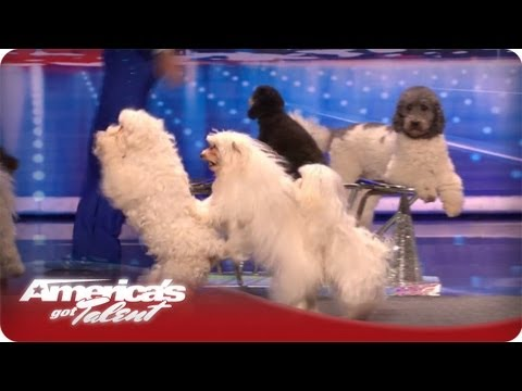 Jump-Roping Dog - Olate Dogs Audition - America's Got Talent Season 7