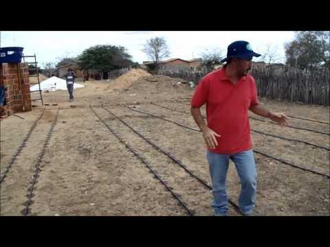 Implantação de sistema de irrigação por gotejamento