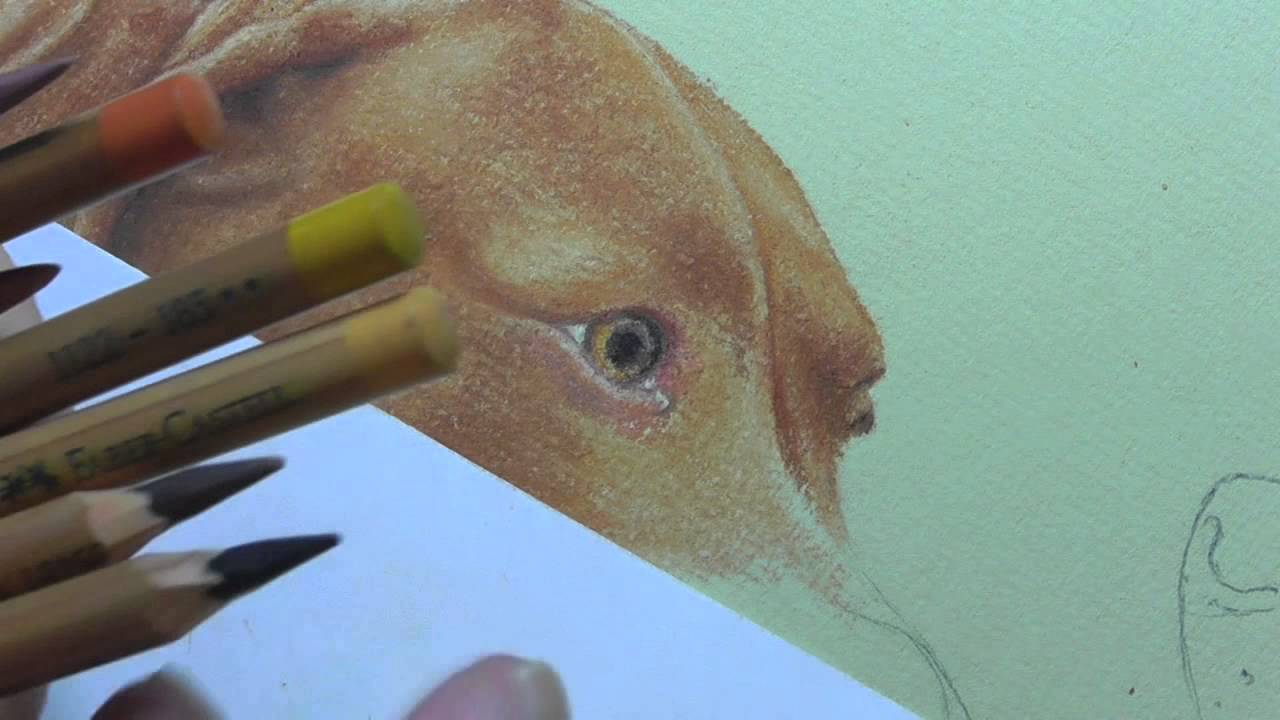 how to draw a dog eye with coloured pencils