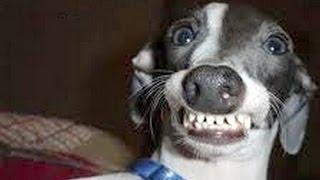 Perros con caras divertidas
