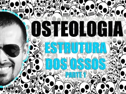 Vídeo Aula 006 (Parte 1/2) - Sistema Ósseo (esquelético): Estrutura dos ossos longos