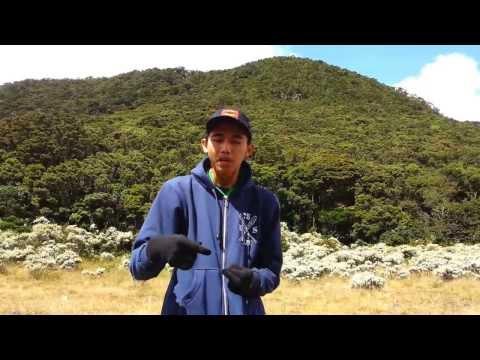 Beatbox At Gunung Gede Pangrango - @Alenalaras