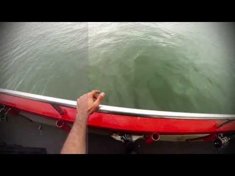 Go Pro Hero 3 - Blue Fishing - Hel Cat II