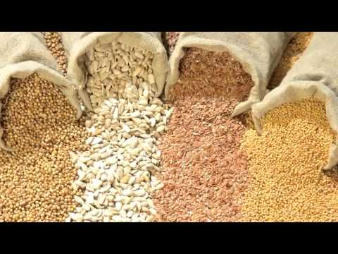 Seeds of Death: Unveiling The Lies of GMO\'s - Full Movie