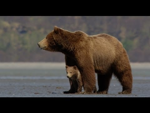 Disney Nature's Bears - Official Trailer