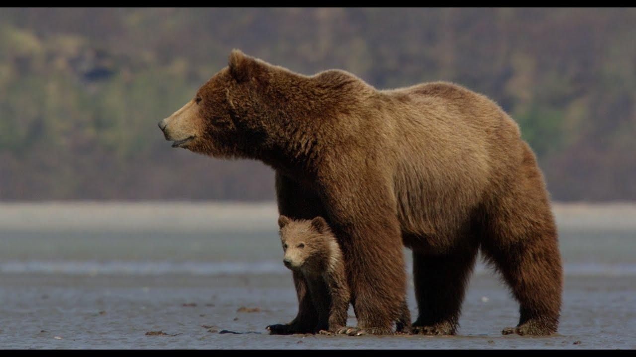 Disneynature's Bears - Official Trailer