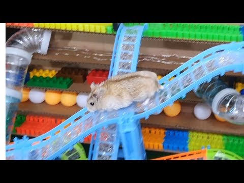 My Funny Pet Hamster in Sky Garden Maze Obstacle Course
