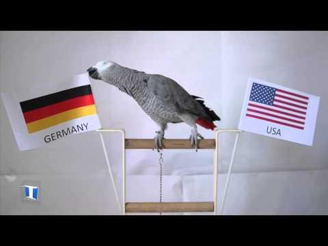 Nico the Parrot prediction: Germany vs US